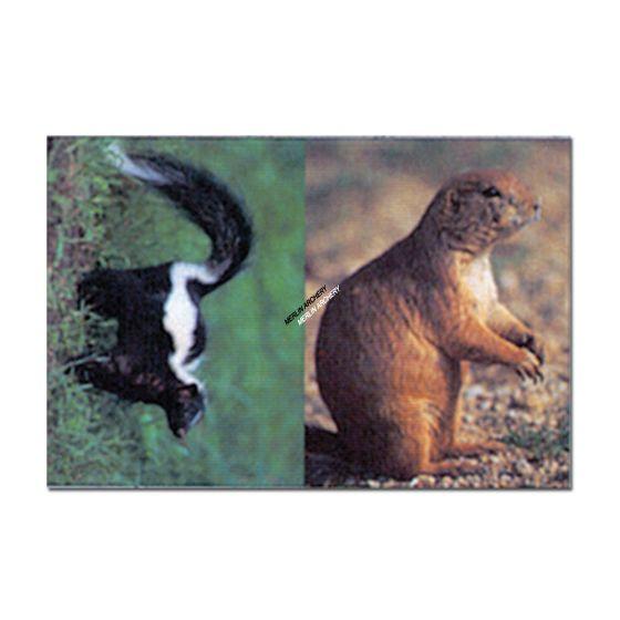 Delta Mckenzie Target Face - Prairie Dog/Skunk