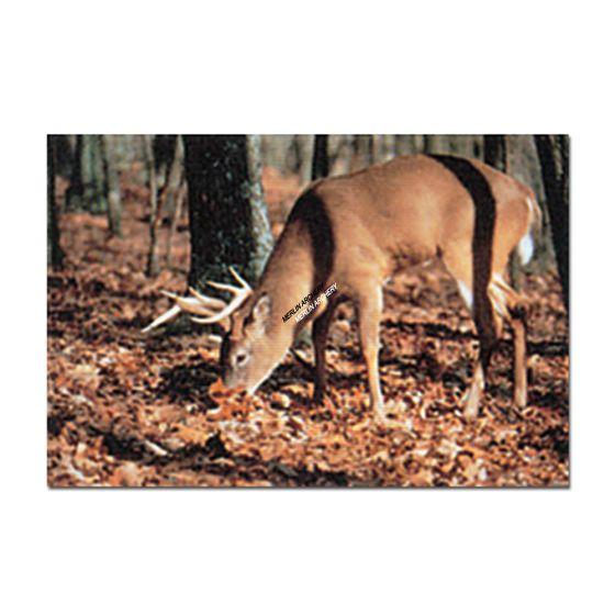 Delta Mckenzie Target Face - 102 Whitetail Deer