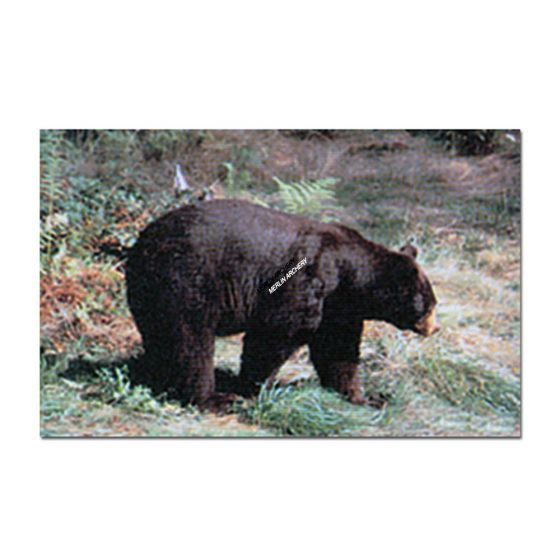 Delta Mckenzie Target Face - Black Bear