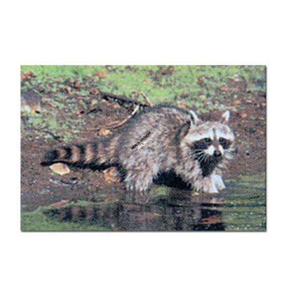 Delta Mckenzie Target Face - Raccoon