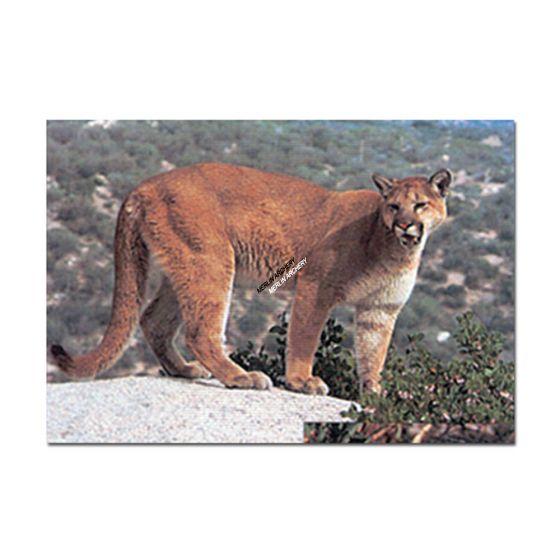 Delta Mckenzie Target Face - Cougar