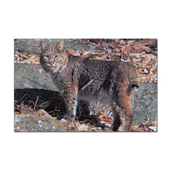 Delta Mckenzie Target Face - Bobcat