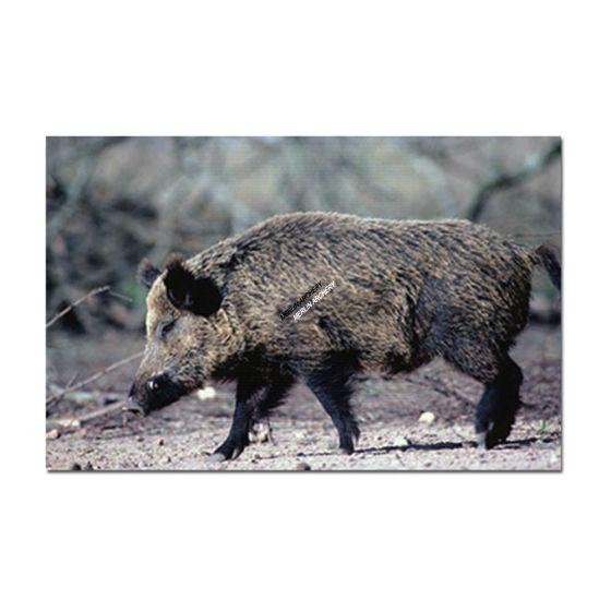Delta Mckenzie Target Face - Wild Boar