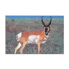Delta Mckenzie Target Face - Antelope